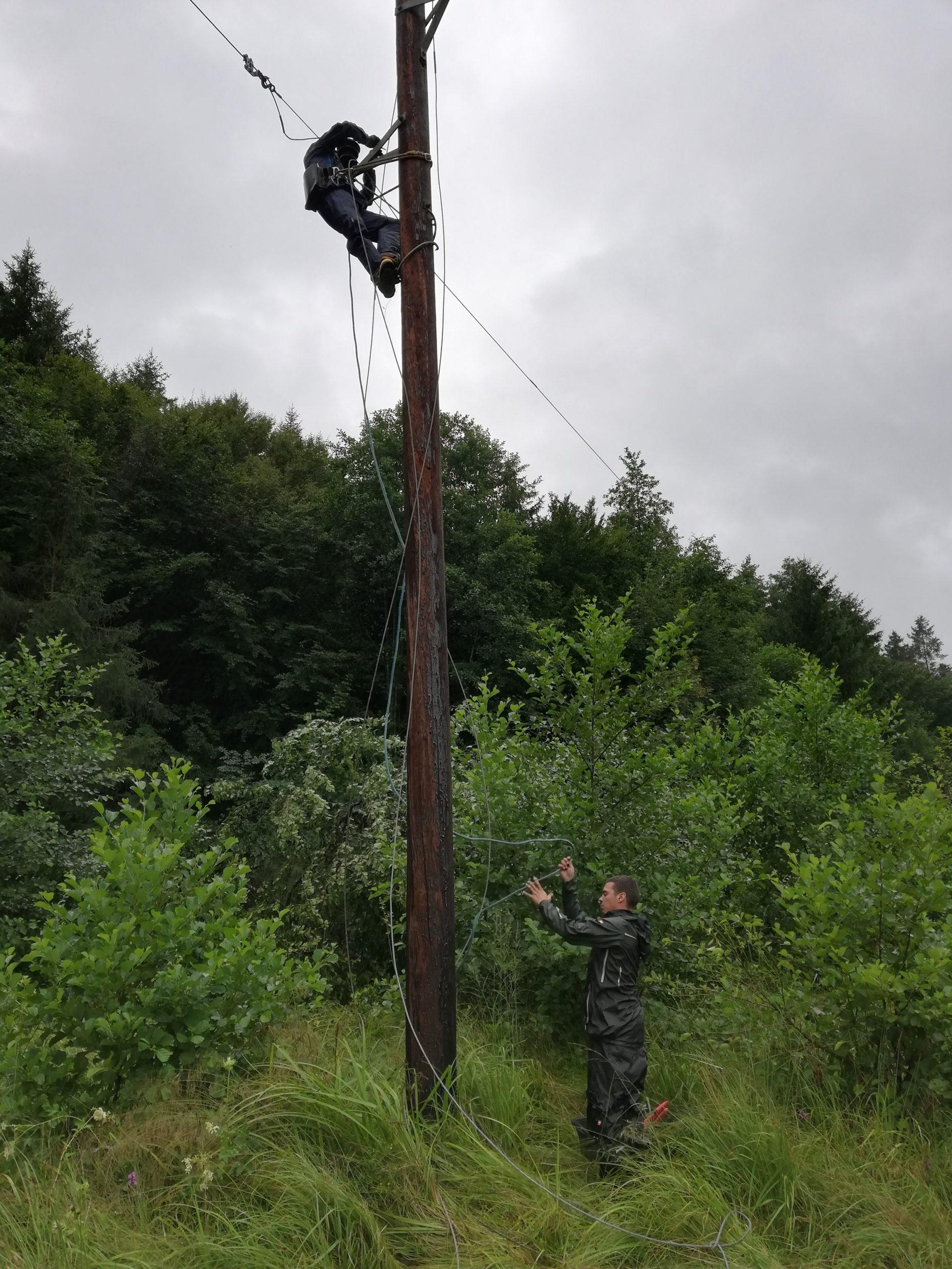 Baum fällt in Freileitung